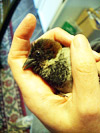 A young bird I saved